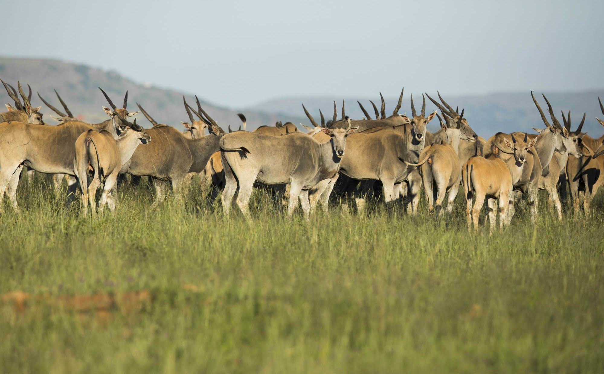 Ndaka safari lodge - wildlife at nambiti big 5 private game reserve