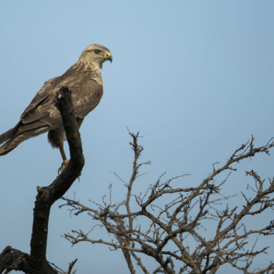 Ndaka safari lodge -birds at Nambiti Big 5 Private game reserve