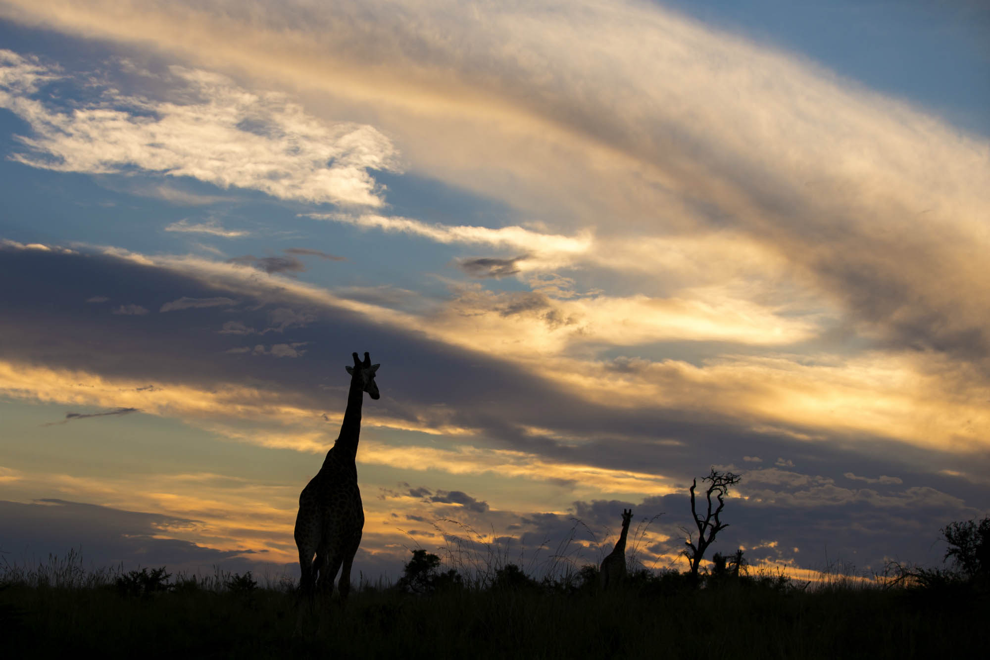 Ndaka safari lodge - giraffe Nambiti big 5 private game reserve
