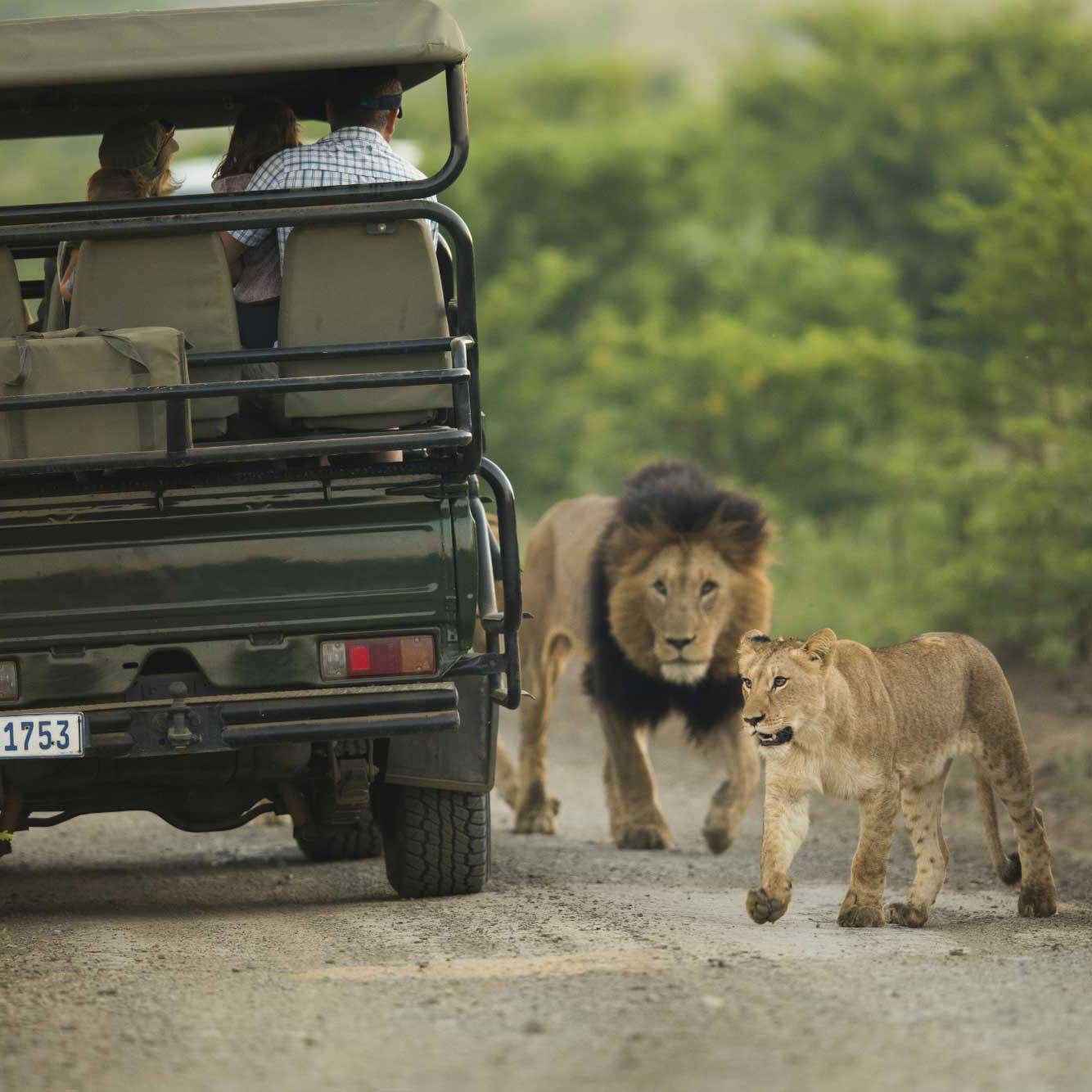 Your Safari