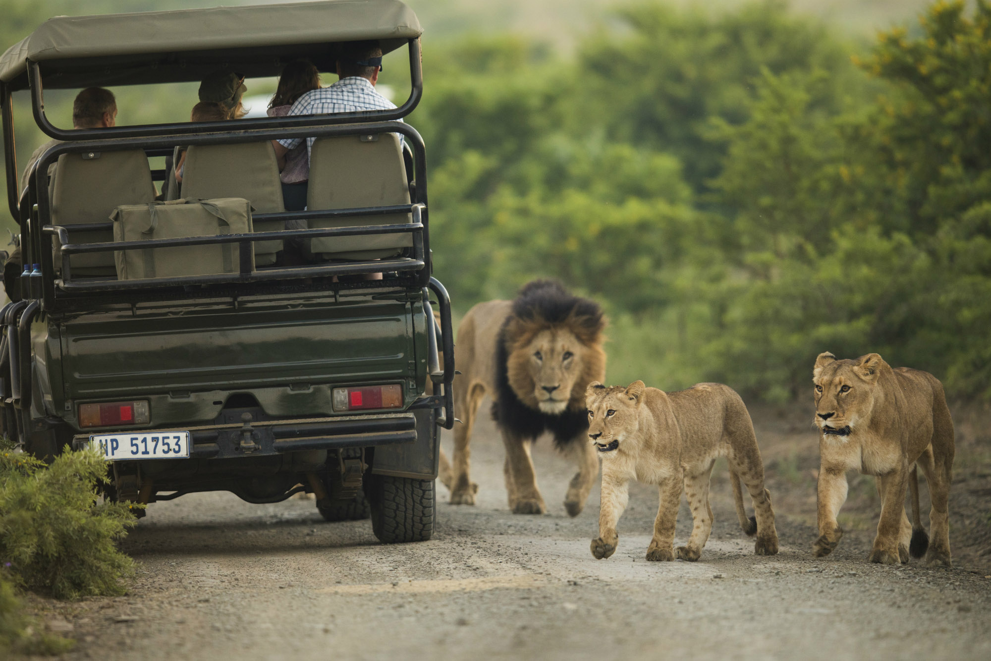 Ndaka safari lodge - game drive wildlife